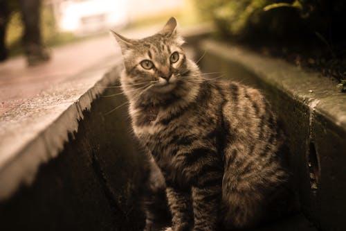 Gratis lagerfoto af dyr, dyrefotografering, kat, katte