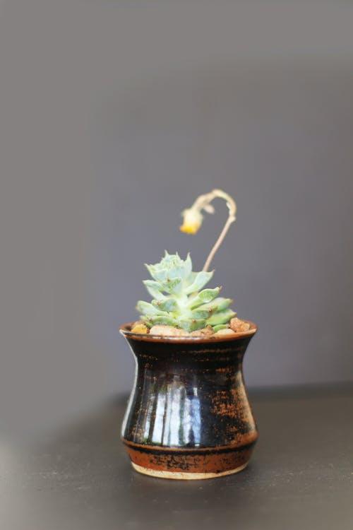 Gratis lagerfoto af gryde, grøn, natur, plante