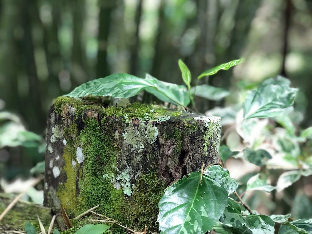 δασικός, δάσος, φύση
