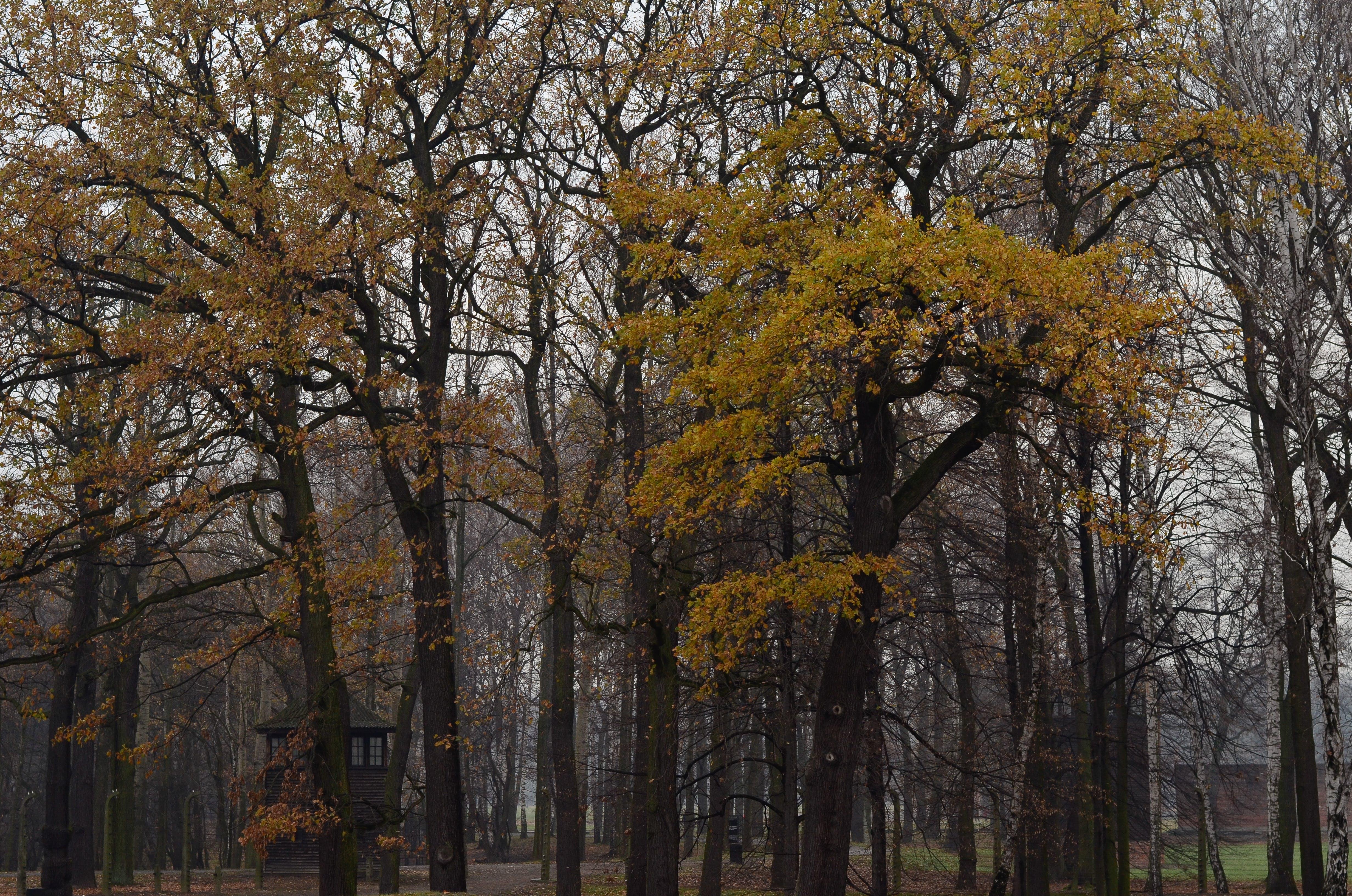 bäume, tageslicht, umwelt