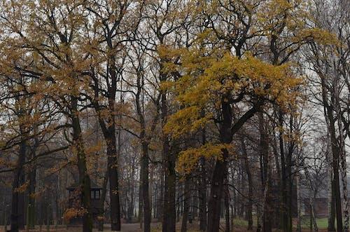 Fotos de stock gratuitas de arboles, luz de día, medio ambiente