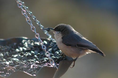 Imagine de stoc gratuită din hrănitoare de păsări