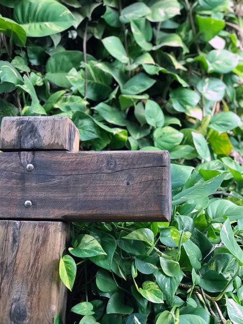 Free stock photo of bench, wooden bench