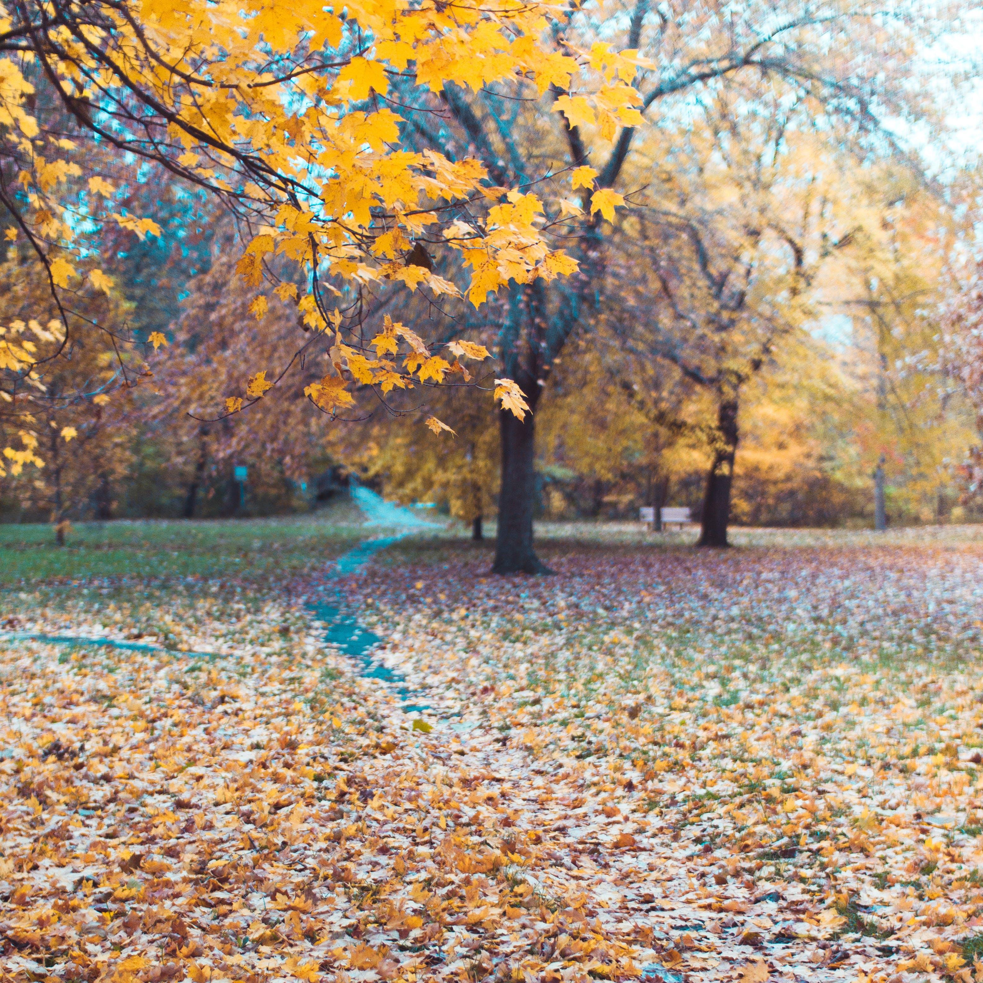 Kostenloses Stock Foto zu herbstfarben, parkpfad, pfad