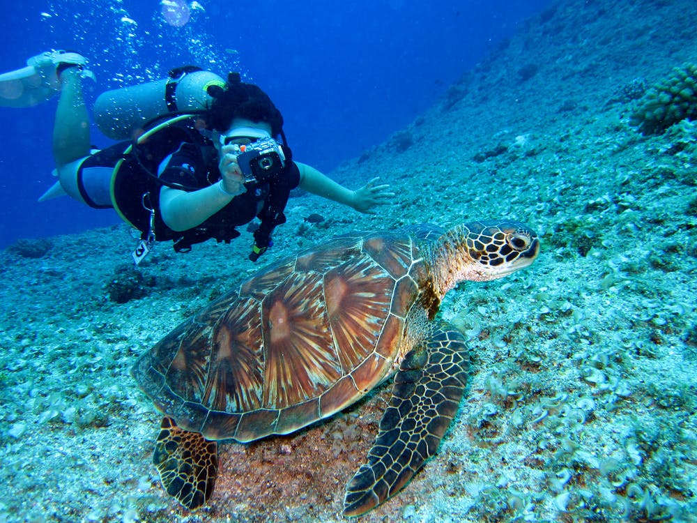 What You Need To Go Scuba Diving