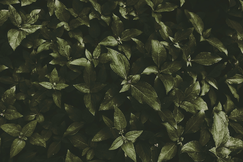 bitkiler, büyüme, çevre, doğa içeren Ücretsiz stok fotoğraf