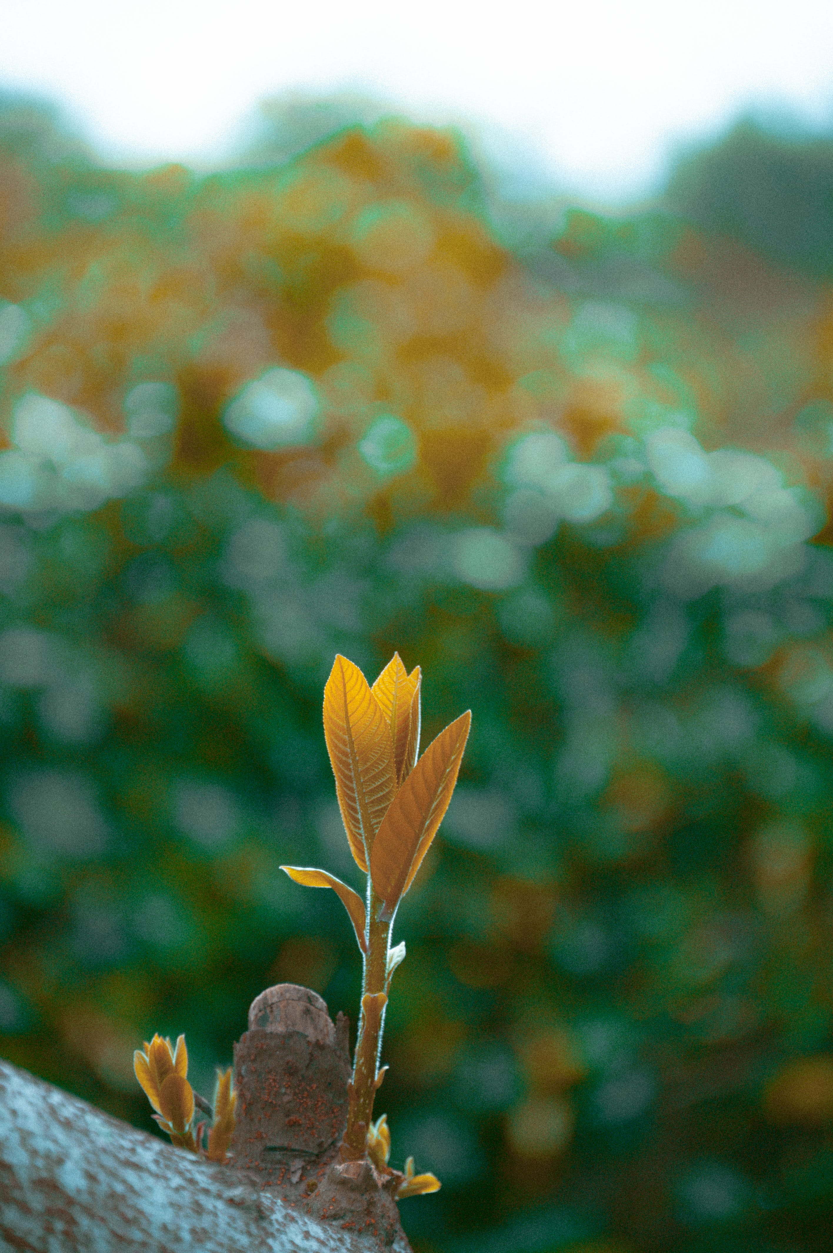 Selected Focus Photography Of Brown Leafed Plant