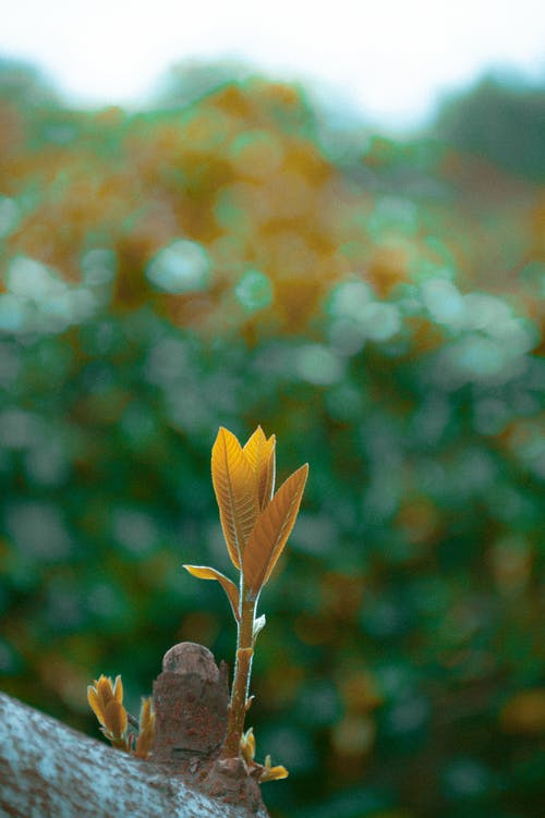 Kostenloses Stock Foto zu blätter, makro, nahansicht, pflanze