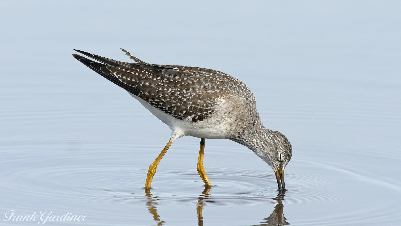 Free stock photo of bird, long legs, wader