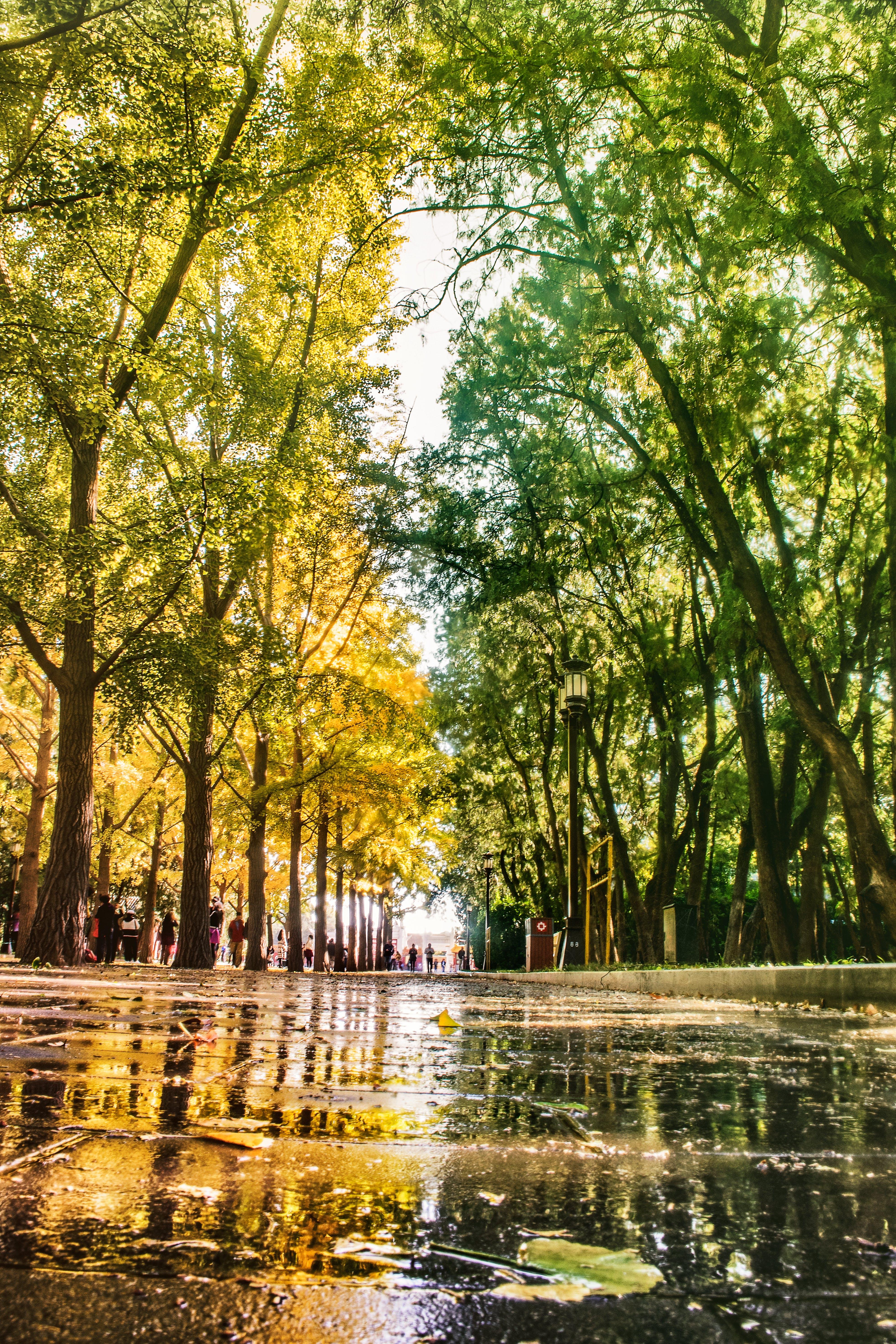 Free stock photo of 下雨, 倒影, 公园, 北京