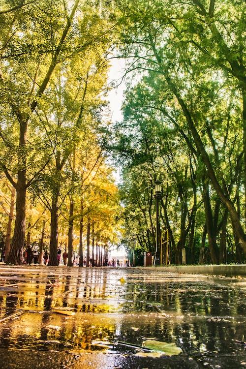 Ingyenes stockfotó 下雨, 倒影, 公园, 北京 témában
