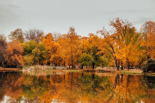 公園, 反射, 季節, 樹木 的 免費圖庫相片