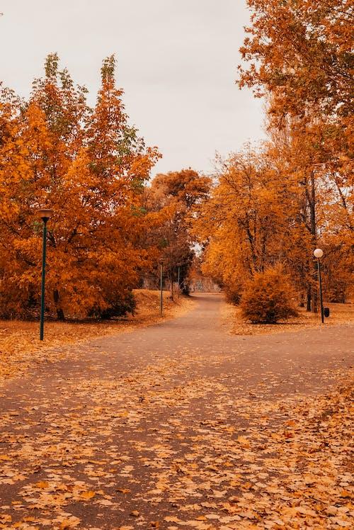 Kostenloses Stock Foto zu bäume, herbst, park, pfad