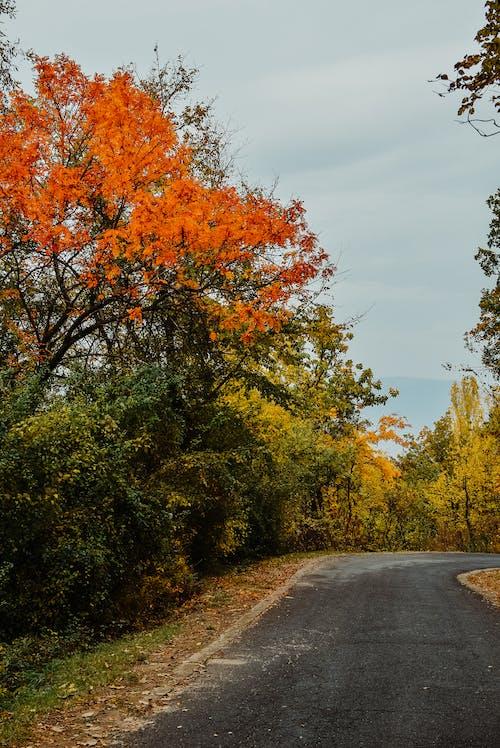 คลังภาพถ่ายฟรี ของ ตก, ต้นไม้, ถนน, ธรรมชาติ