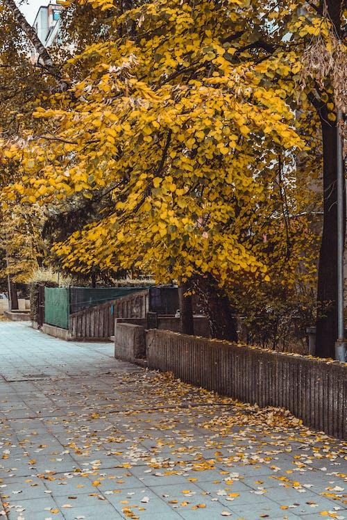 Základová fotografie zdarma na téma barvy, denní světlo, jasný, krajina