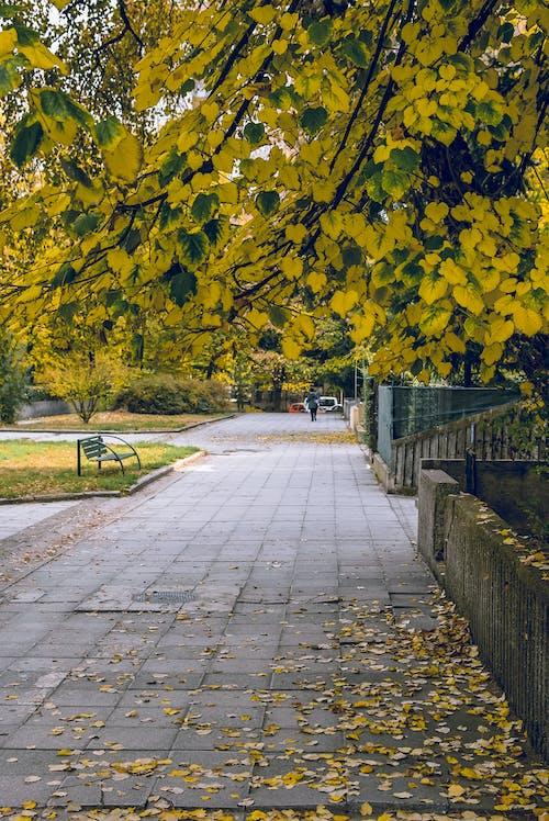 Fotobanka sbezplatnými fotkami na tému človek, denné svetlo, dláždená cestička, dláždený chodník