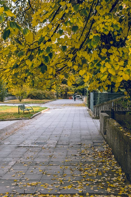 Blätter Auf Dem Bürgersteig Neben Dem Zaun
