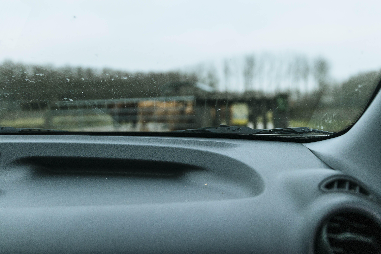 Kostenloses Stock Foto zu auto, autoinnenraum, blurr, kühe
