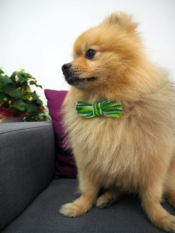 Základová fotografie zdarma na téma nejroztomilejší pes, novak, pes