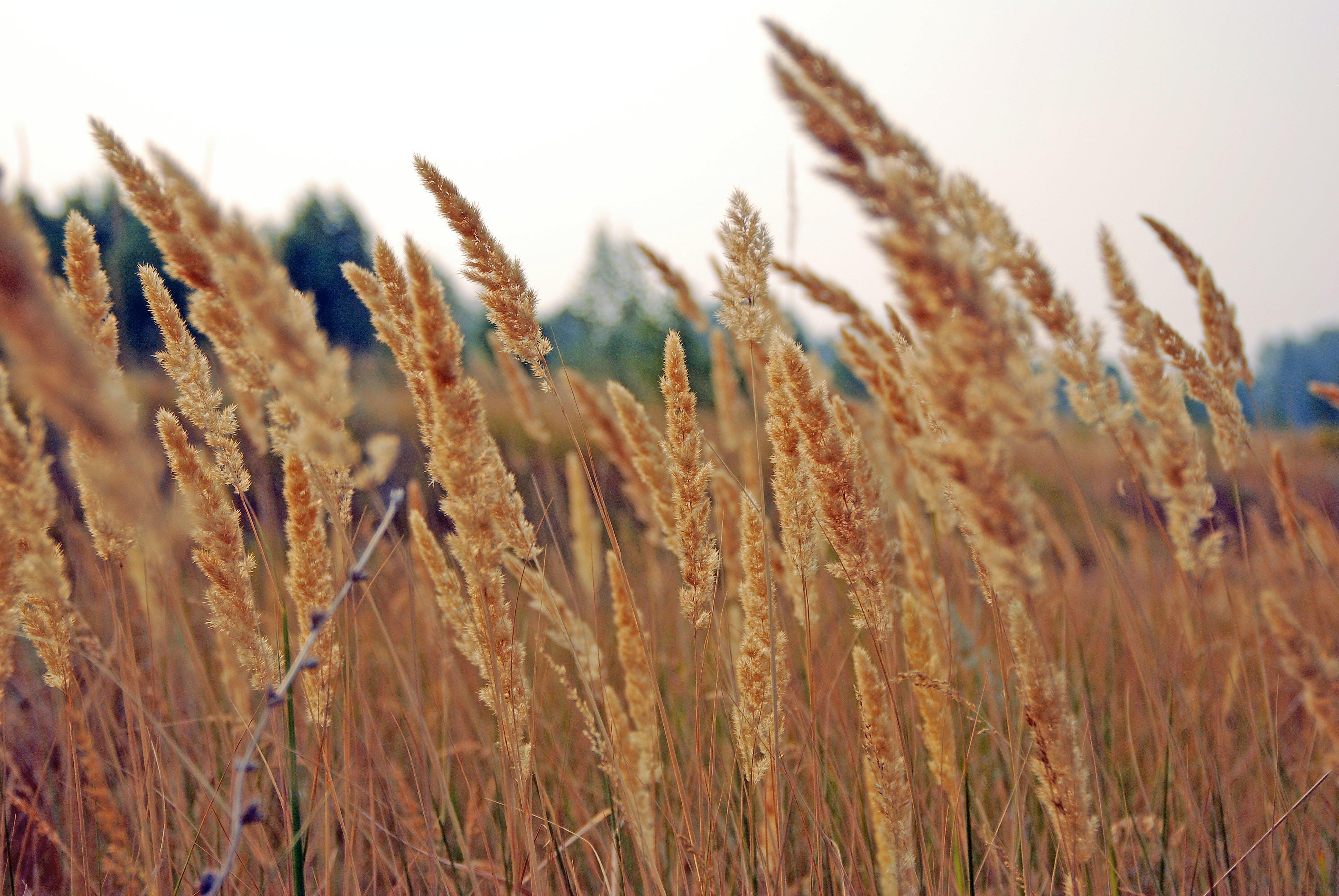 Free stock photo of farm, field, grass, summer
