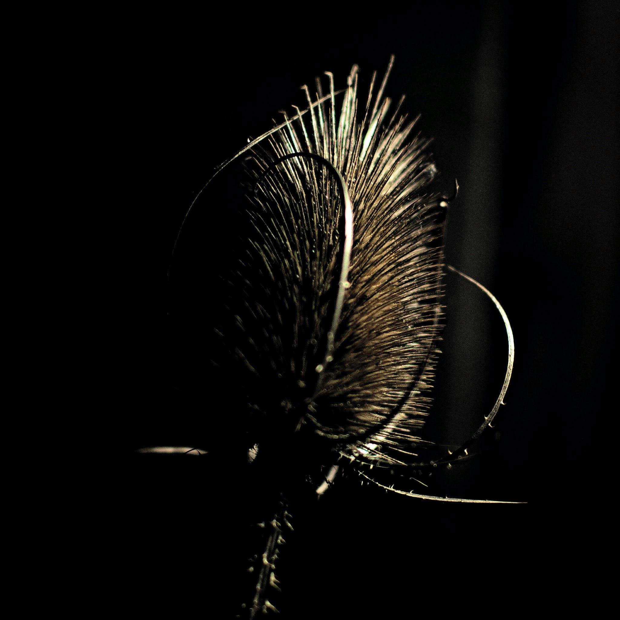 Free stock photo of cactus flower, cardoon, nature morte, piquant