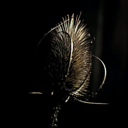 Immagine gratuita di cardone, fiore di cactus, natura morta, natura morte