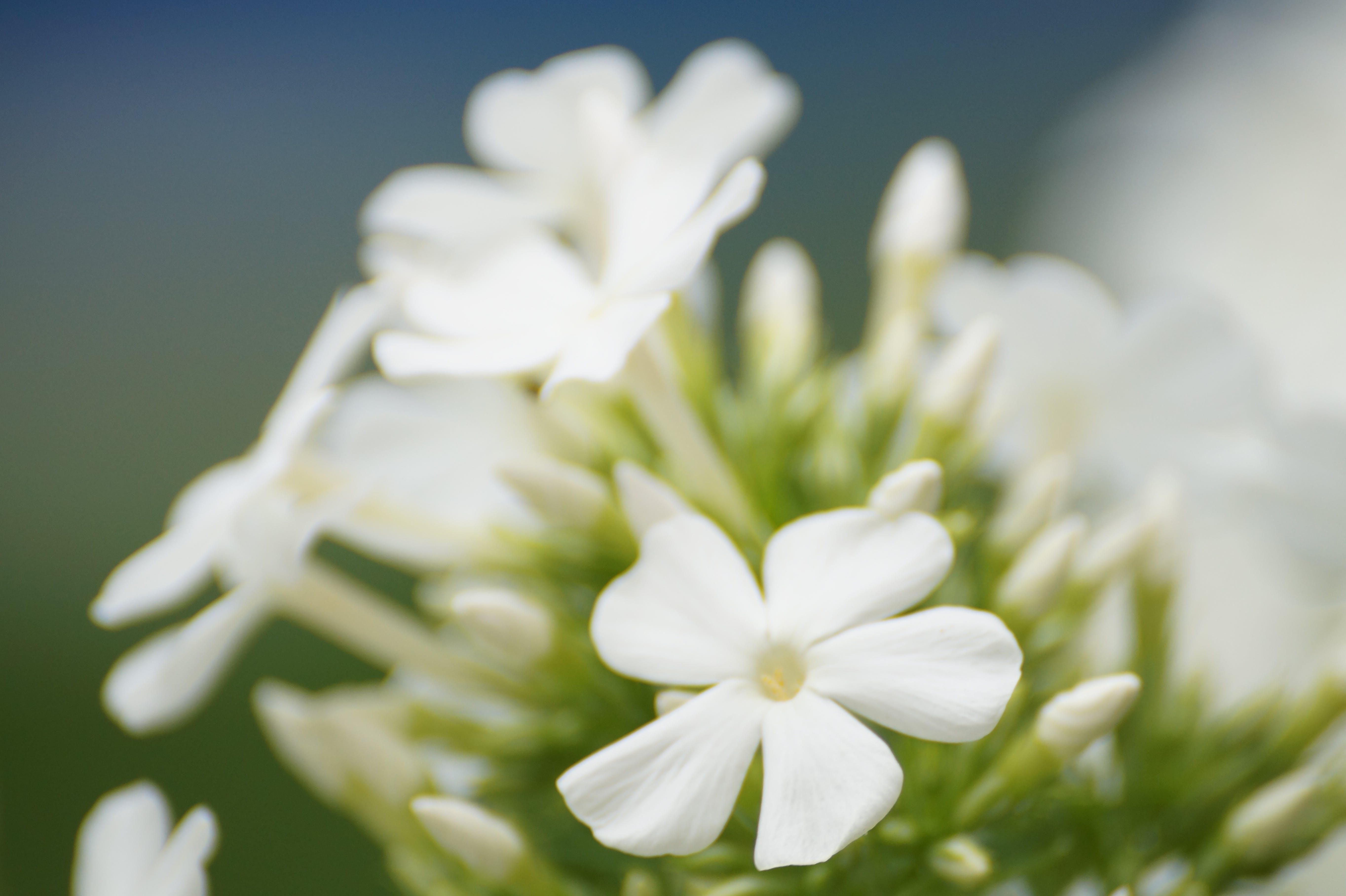 Free stock photo of flowering