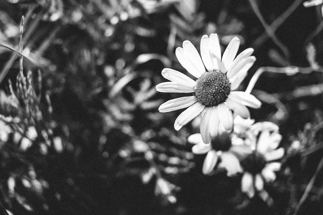 4k taustakuva, kukka, musta