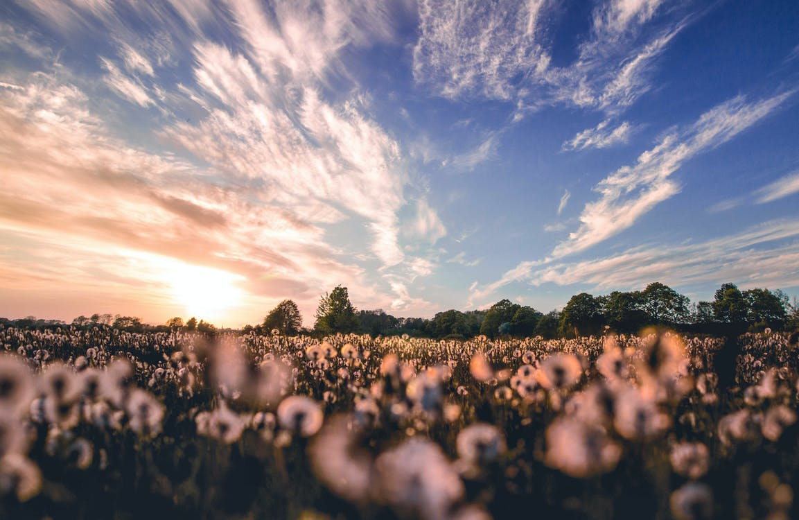 Nature Photography of Flower Field