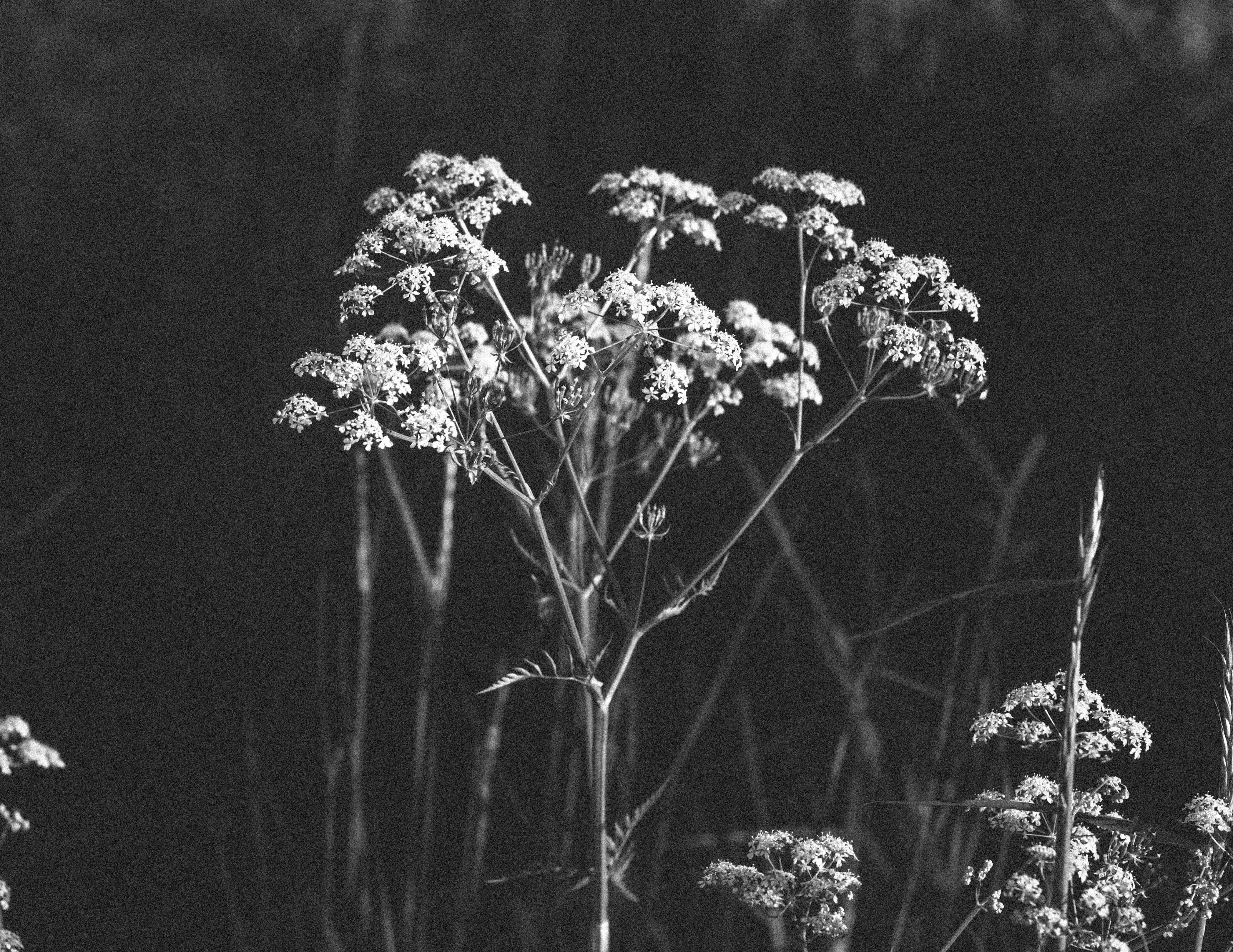 4k 바탕화면, 검은색 바탕화면, 검은색 배경, 바탕화면의 무료 스톡 사진