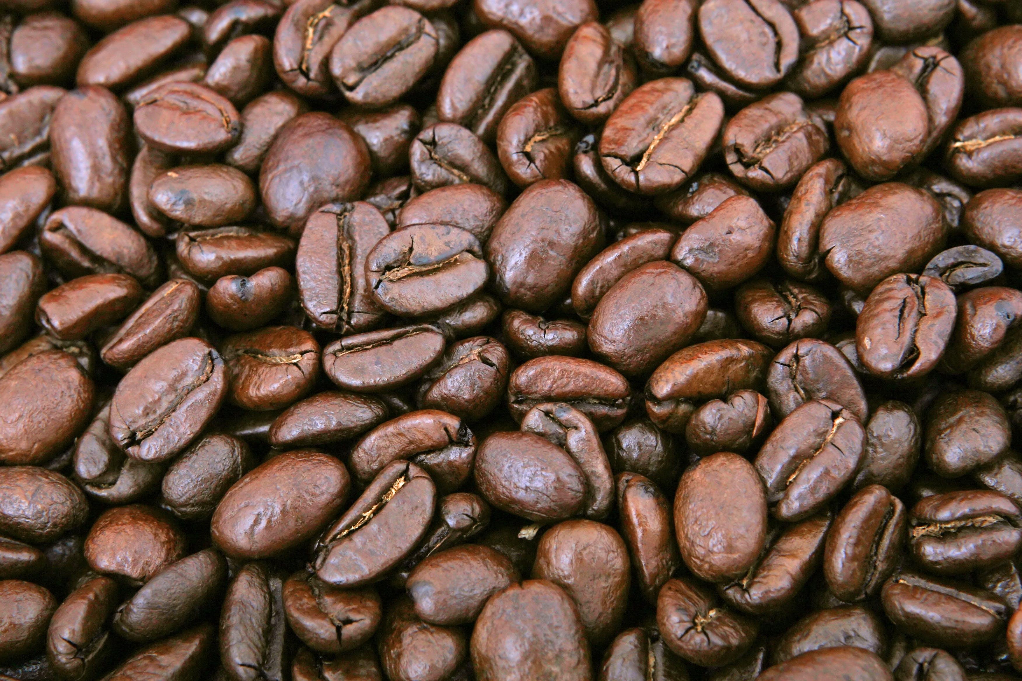 Fotobanka sbezplatnými fotkami na tému hnedá, káva, kávové zrná, kofeín