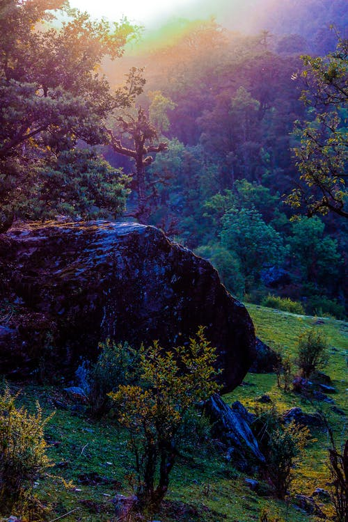 ağaçlar, çalılar, çim, dağ içeren Ücretsiz stok fotoğraf