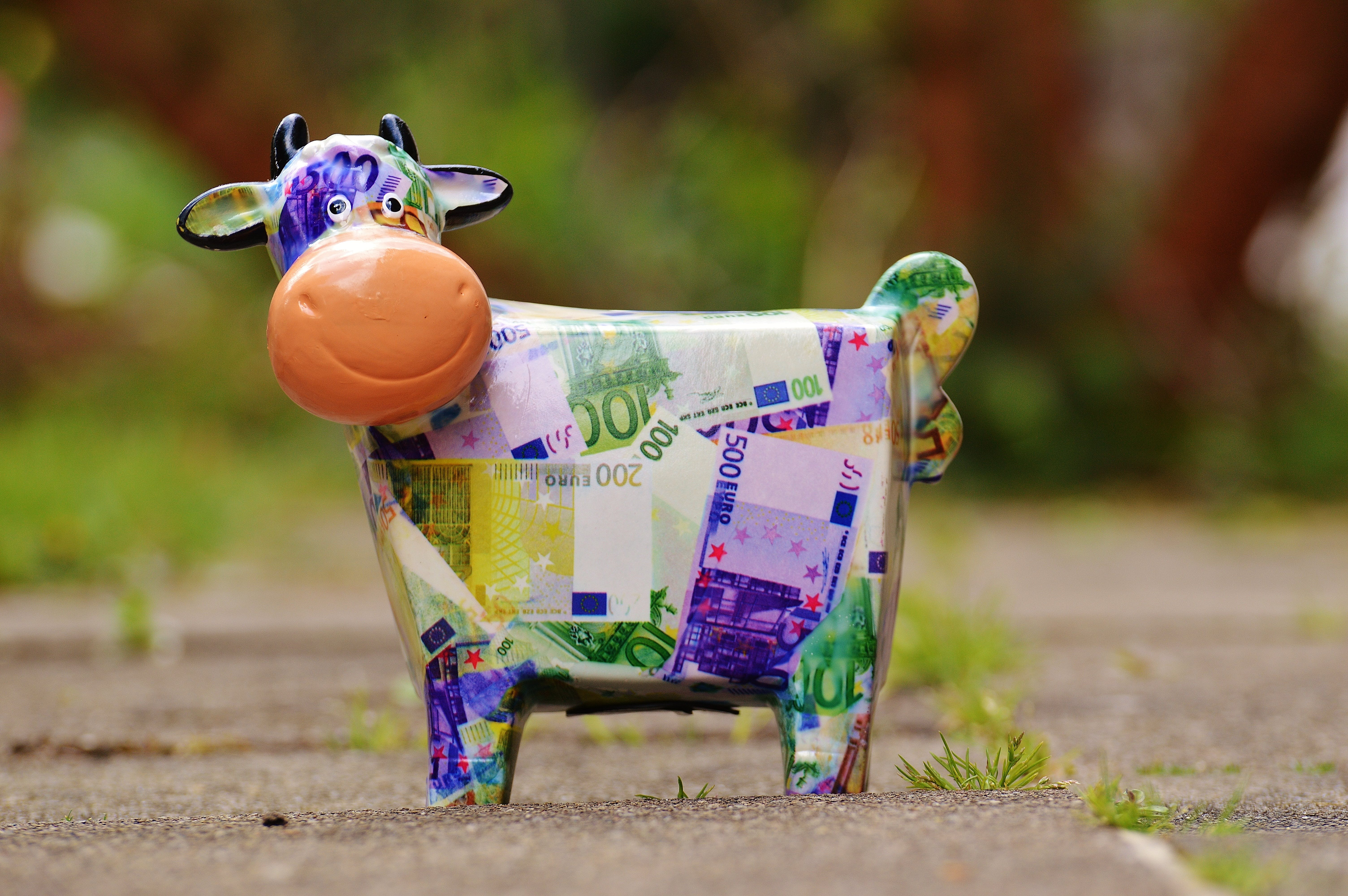 Banknote Cow on Gray Conncrete Road
