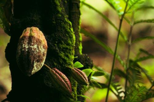 ağaç, çekirdekler, doğa, doğada güzellik içeren Ücretsiz stok fotoğraf