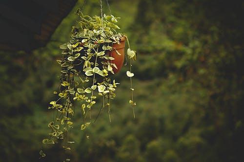 asılı, bitki, makro içeren Ücretsiz stok fotoğraf