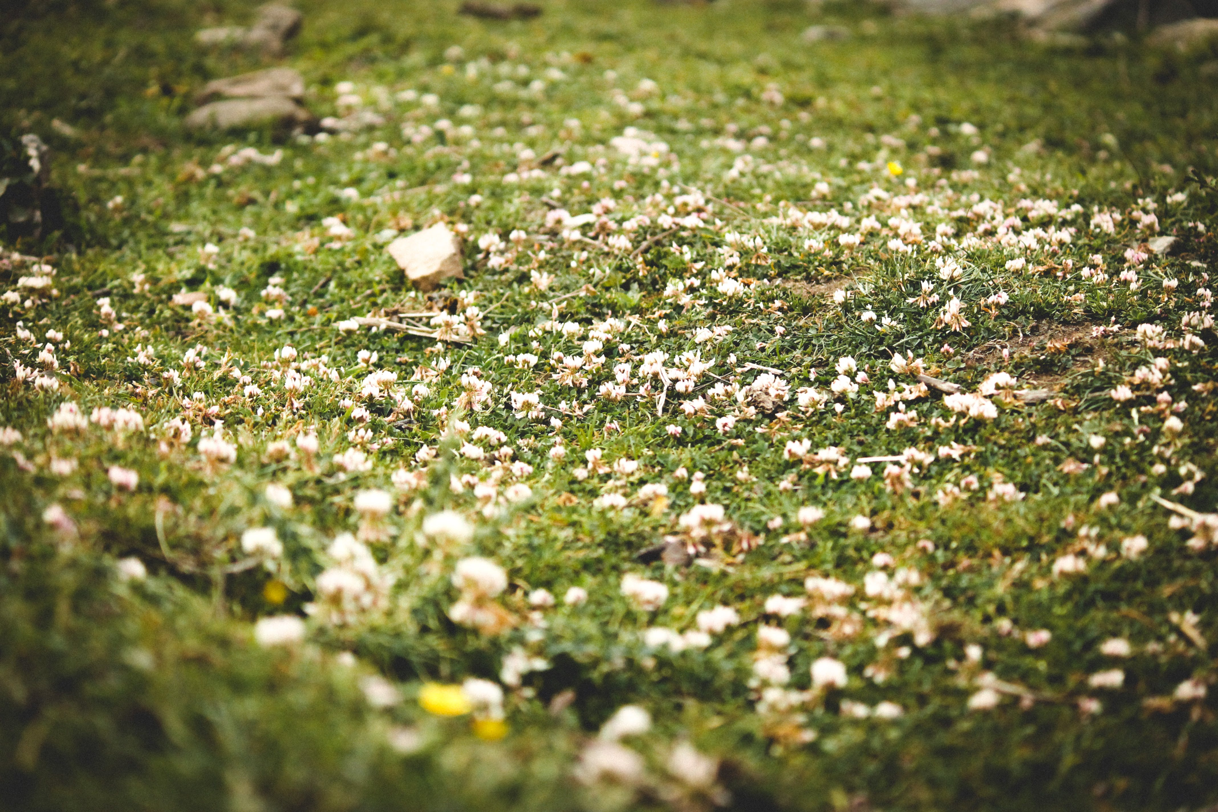 Free stock photo of flowers, forest, grass, grass field