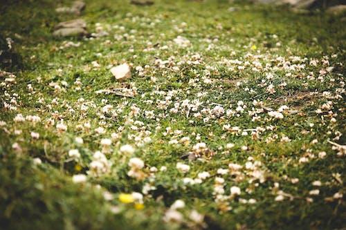 Barış, çekilmiş, Çiçekler, çim içeren Ücretsiz stok fotoğraf