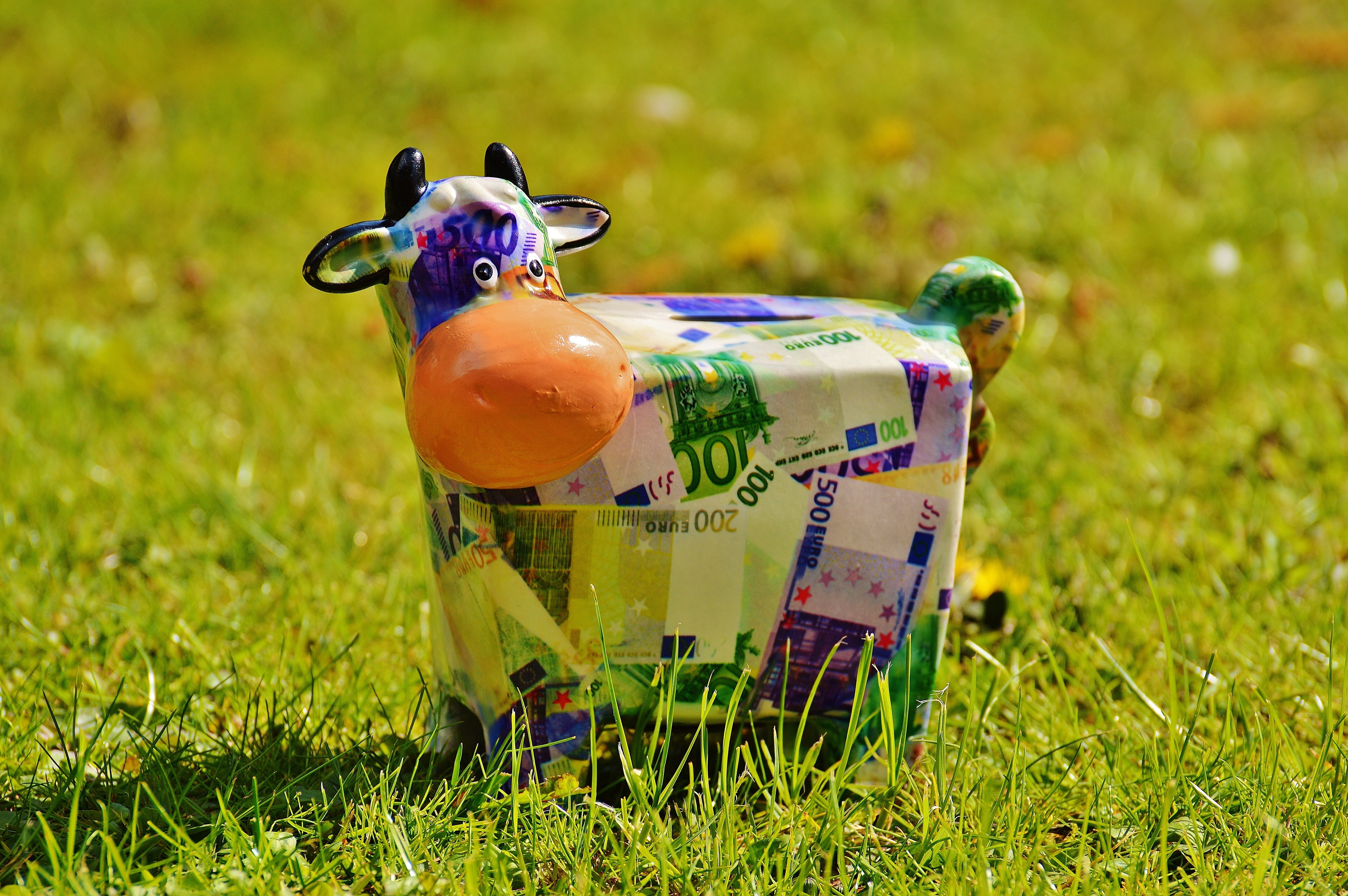 Free stock photo of meadow, money, cow, funny