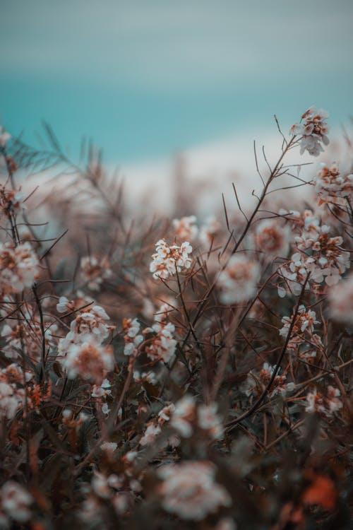 alan derinliği, bulanıklık, büyüme, Çiçek açmak içeren Ücretsiz stok fotoğraf