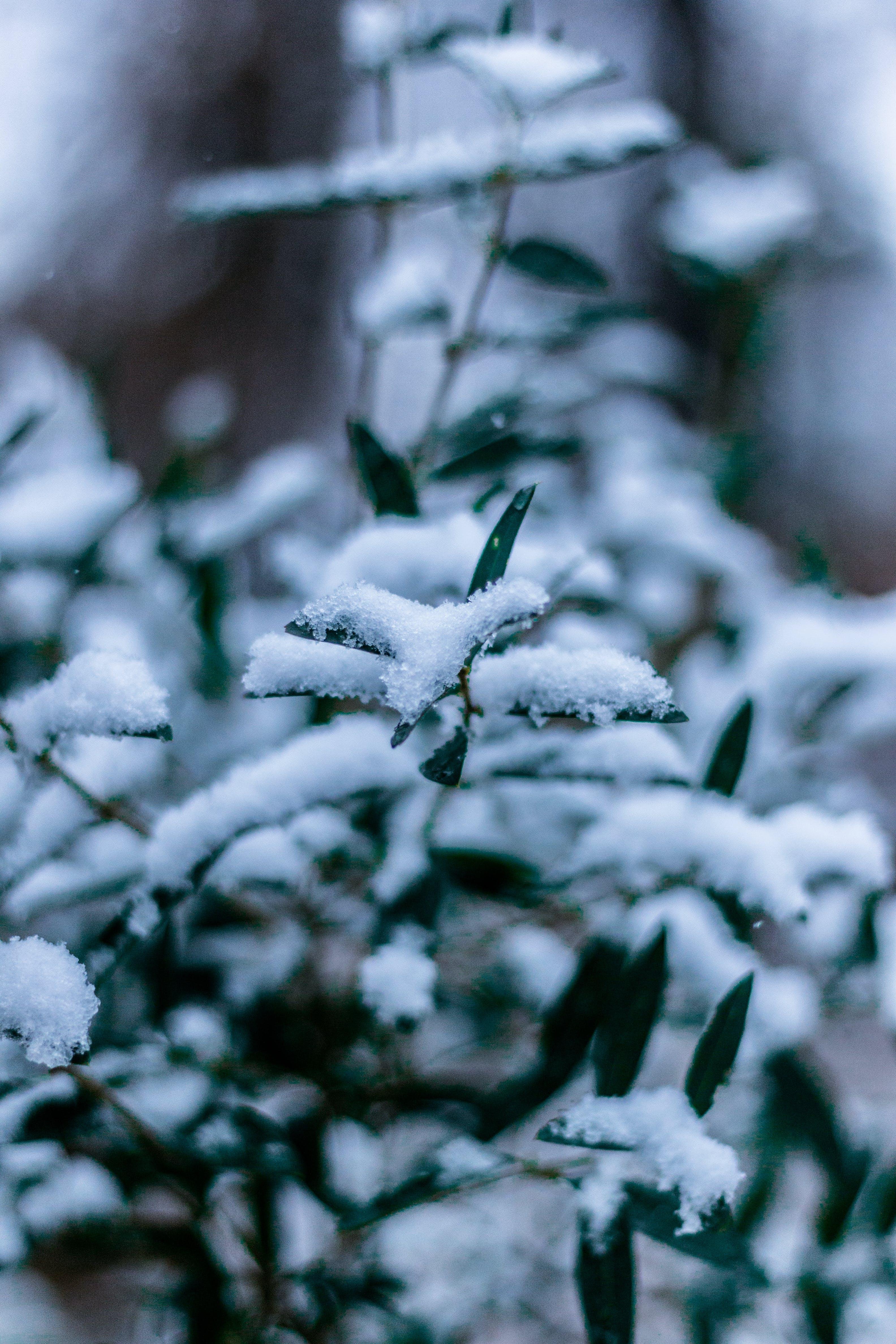 Foto d'estoc gratuïta de cobert de neu, constipat, gebre, hivern