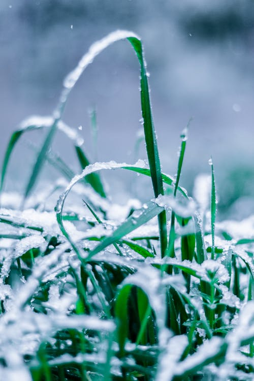 Close-Up Photo of Wet Grass