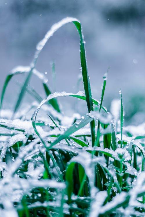 deszcz, głębia pola, krople