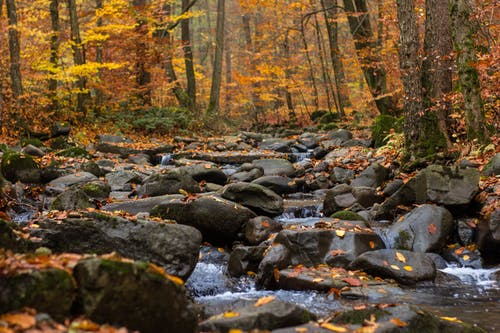 Free stock photo of Autumn river