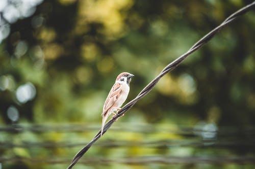 Gratis lagerfoto af dyr, fugl, makro, siddende