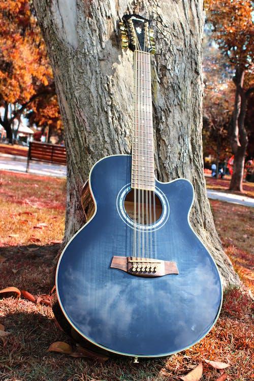 公園, 吉他, 弦樂器, 樂器 的 免费素材照片