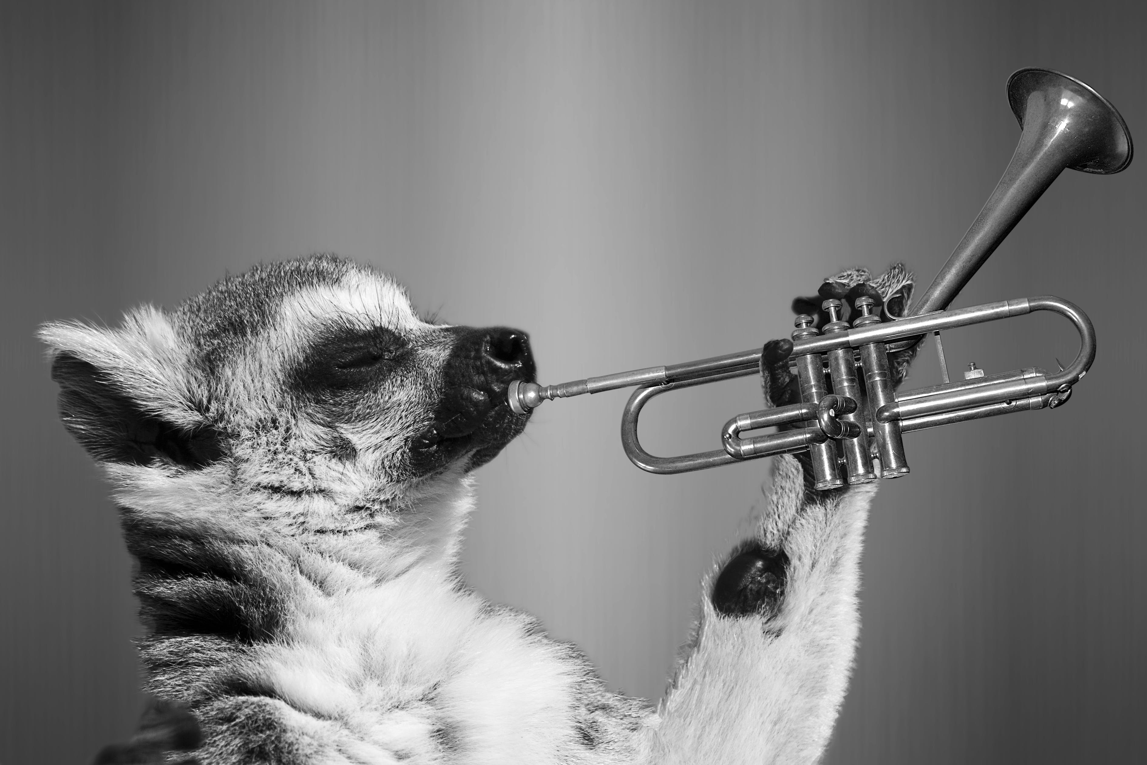 Animal Playing Trumpet