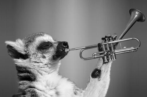 Fotobanka sbezplatnými fotkami na tému čierny abiely, divočina, lemur, roztomilý