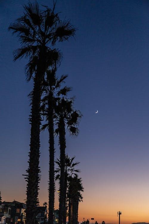 나무, 새벽, 실루엣