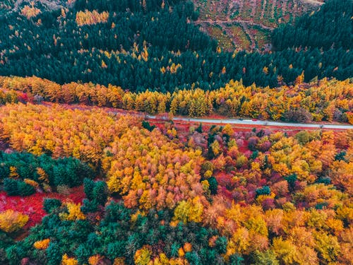 Základová fotografie zdarma na téma denní světlo, les, letecký snímek, příroda
