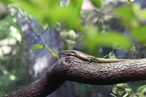 Fotos de stock gratuitas de animal, animal salvaje, concentrarse, corteza de árbol
